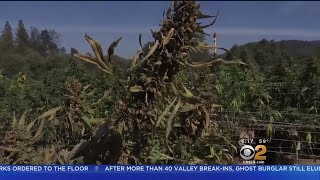 New Fire Breaks Out In Santa Cruz Mountains