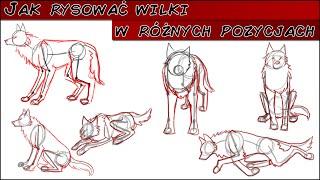 Jak rysować wilki w różnych pozycjach?