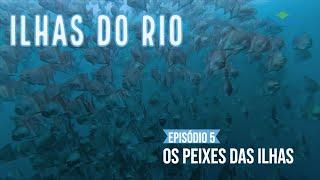 Os peixes das Ilhas do Rio - Webserie Ilhas do Rio - Ep.#5