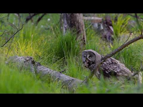 Lasy bagienne - trailer filmu