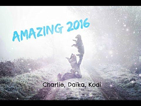 Amazing 2016 [Charlie, Daïka, Kodi]