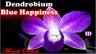 In today's video I present to you the Dendrobium Blue Happiness. Th...
