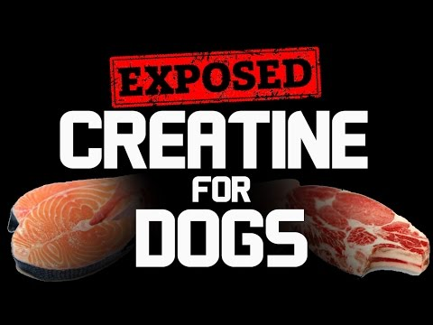 If You Are Feeding Your Dog Meat, You're Also Feeding Them Creatine.