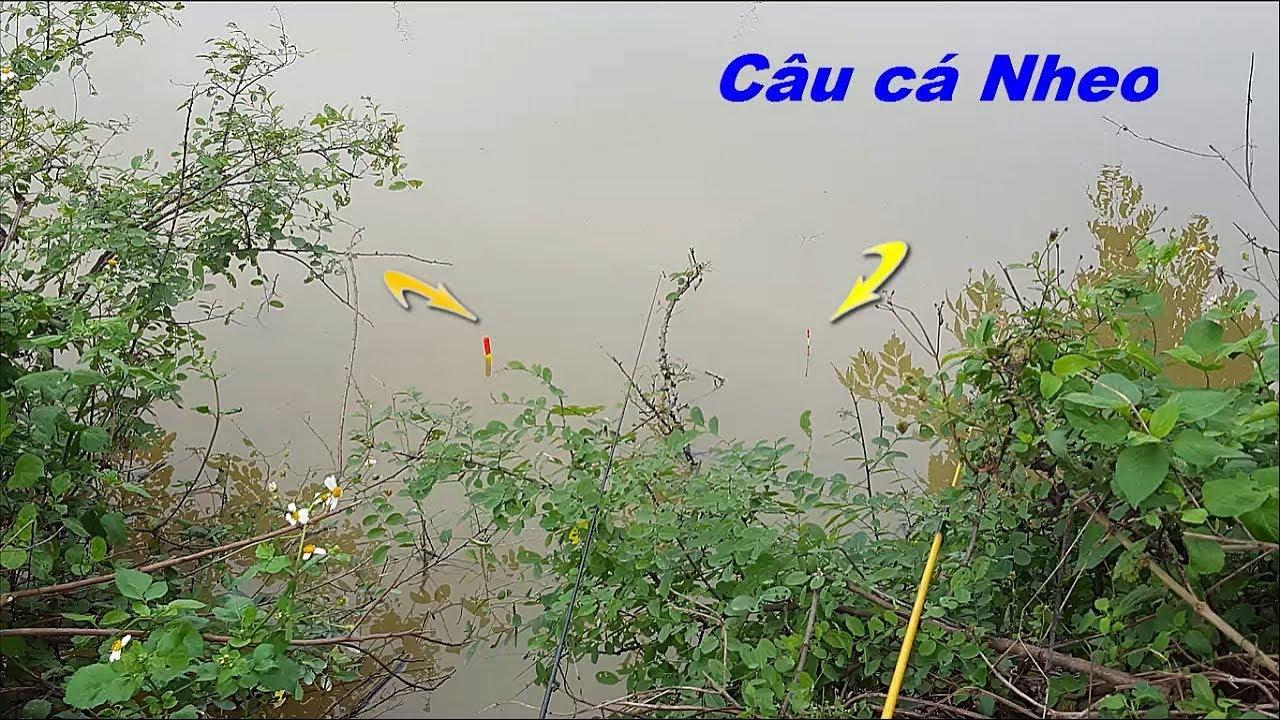 Cách  câu cá nheo đồng đơn giản cực nhậy | Cá lôi mất phao