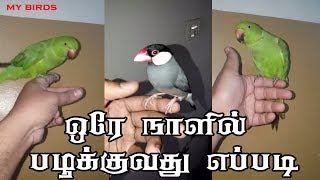 how to training birds in Tamil | green parrot training tips | quick train all birds in tamil
