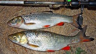 Рыбалка. Подводная охота на реке Сейм/Fishihg and Hunting