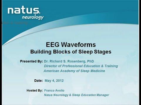 EEG Waveforms Building Blocks of Sleep Staging