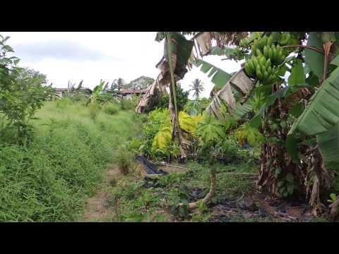 Hmoob Surinam 13. 08. 2015