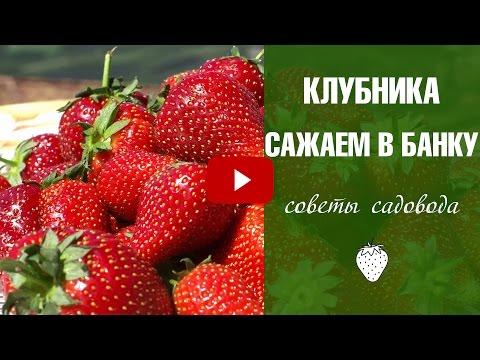 Семена клубники 🍓 Новый нетрадиционный способ❗ Эксперимент!