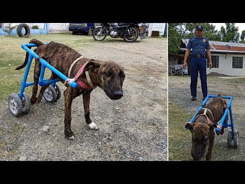 Kind Police Give Dog Wheel Legs In The Philippines