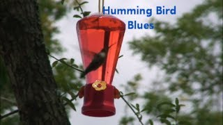 Humming Bird Blues