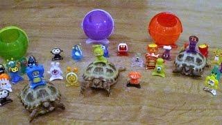 star monsters pocket friends meet the tortoises