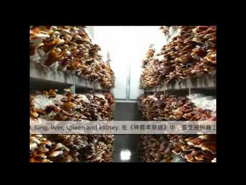 JT organic --- Manufacturing Flow