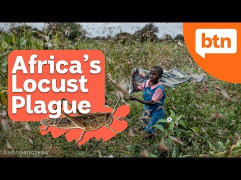 Locust Plague, Greta Nomination & a new season of AFLW - Today's Biggest News