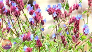 Spring flowers and bird songs # Wild mountain flowers. Without music # Video FHD 1080p