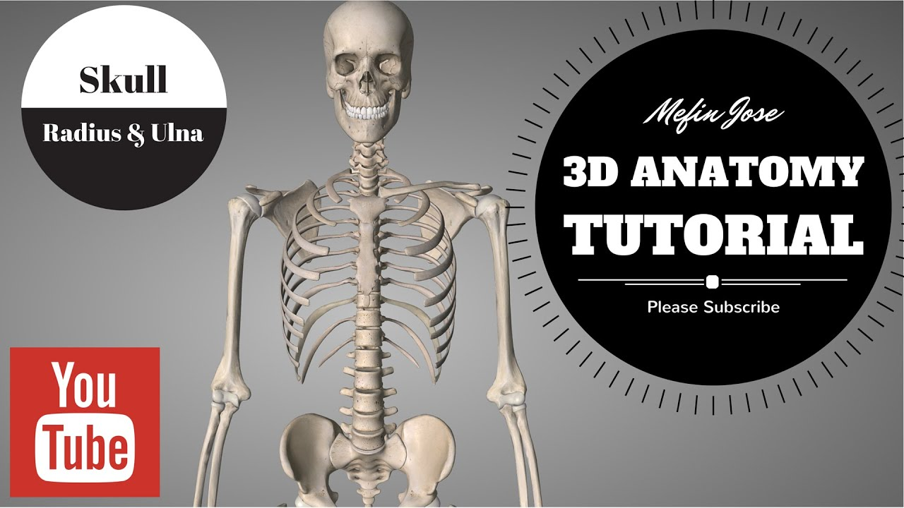 Anatomy of Skull (Cranium) 3D Tutorial: Cranial Bones, & Facial ...