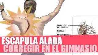 ESCÁPULA ALADA - CORREGIR EN EL GIMNASIO (Entrenamiento y ejercicios de serrato anterior)