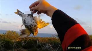 KUZEY KIBRIS CİKLA AVI 12  Zorzales Hunting 12   YouTube