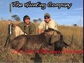 Black Wildebeest Hunt in South Africa with The Hunting Company
