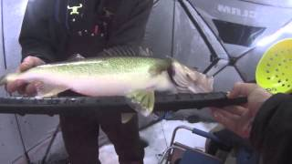 Red Lake Walleyes