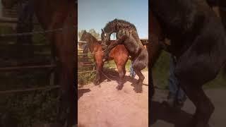 En El Rancho Con El Tocallo Juan Martinez