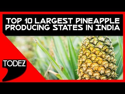 Top 10 Largest Pineapple Producing States In India