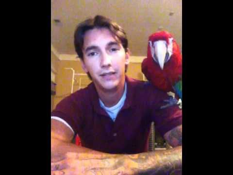 Q&A | Macaws | How long do macaws live?