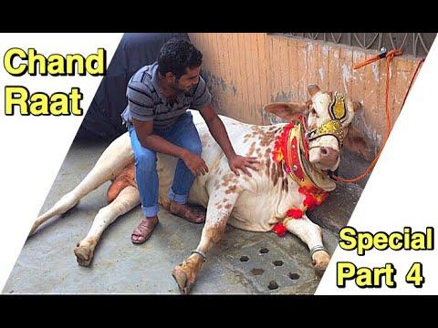 Bakra Eid Ki Chand Rat K Mazey In Lahore | Angry Cow for Qurbani 2019 | Eid ul Adha 2019-Qurban 2019