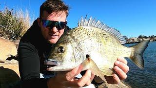 chasing BIG winter bream solo land based fishing Sydney