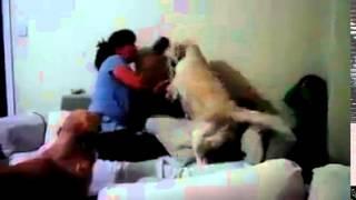 حين ترفض الكلاب عنف البشر : شاهد ردة فعل الكلاب تجاه أم تضرب ابنها