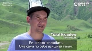 Тайган - древняя порода борзых