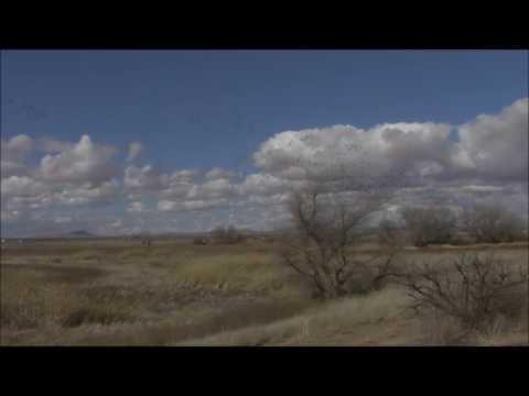 Whitewater Draw Wildlife Area, McNeal, AZ