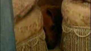 Jan Fennell The Dog Listener