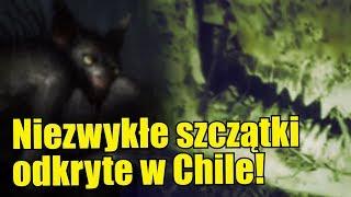 W dżungli w Chile odnaleziono coś co przypomina szczątki dinozaura!