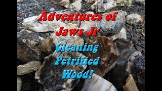 Cleaning Petrified Wood