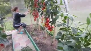 #Анапа#Гостагаевская Всё заростает на участке  Кот экстремал