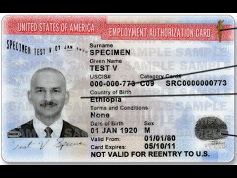 Employment Authorization Document (EAD)