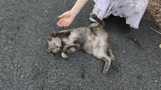 Lovely cat making performance unbelievably cute