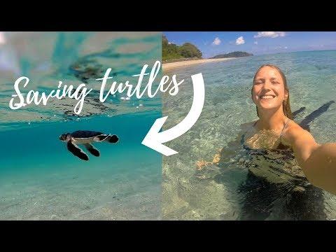 SAVING BABY TURTLES FROM PLASTIC | Comoros Travel Vlog