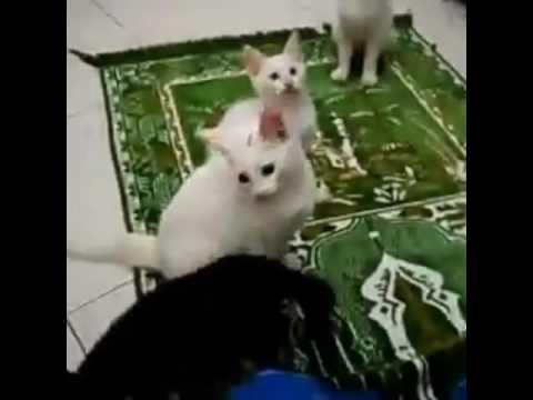 Kucing bertasbih