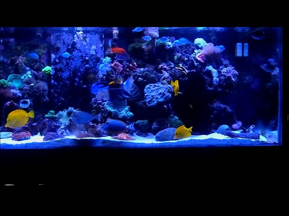 The Best Coral Reef Aquarium In My House Lol Episode 34