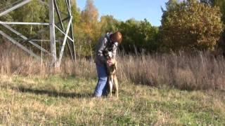 Собаки-инвалиды из приюта