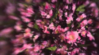 FAN DI FENDI BLOSSOM MOF VIDEO Thumbnail