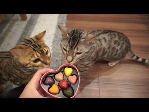 ルトとロゼにバレンタイン用意してみた結果wwww