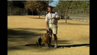 Obedience Training For Dogs How To Stop A Dog Barking