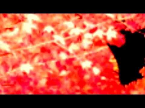 Untitled 1920x108031 Фильм Ирины Одарчук Паули. Под звуки скрипки И та девушка с розой...