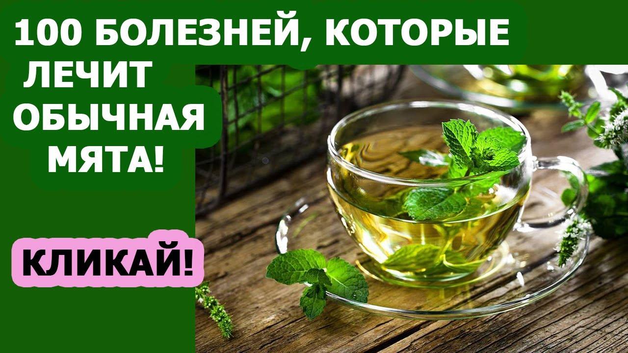 Лечебные свойства мяты Применение Противопоказания Чай с мятой