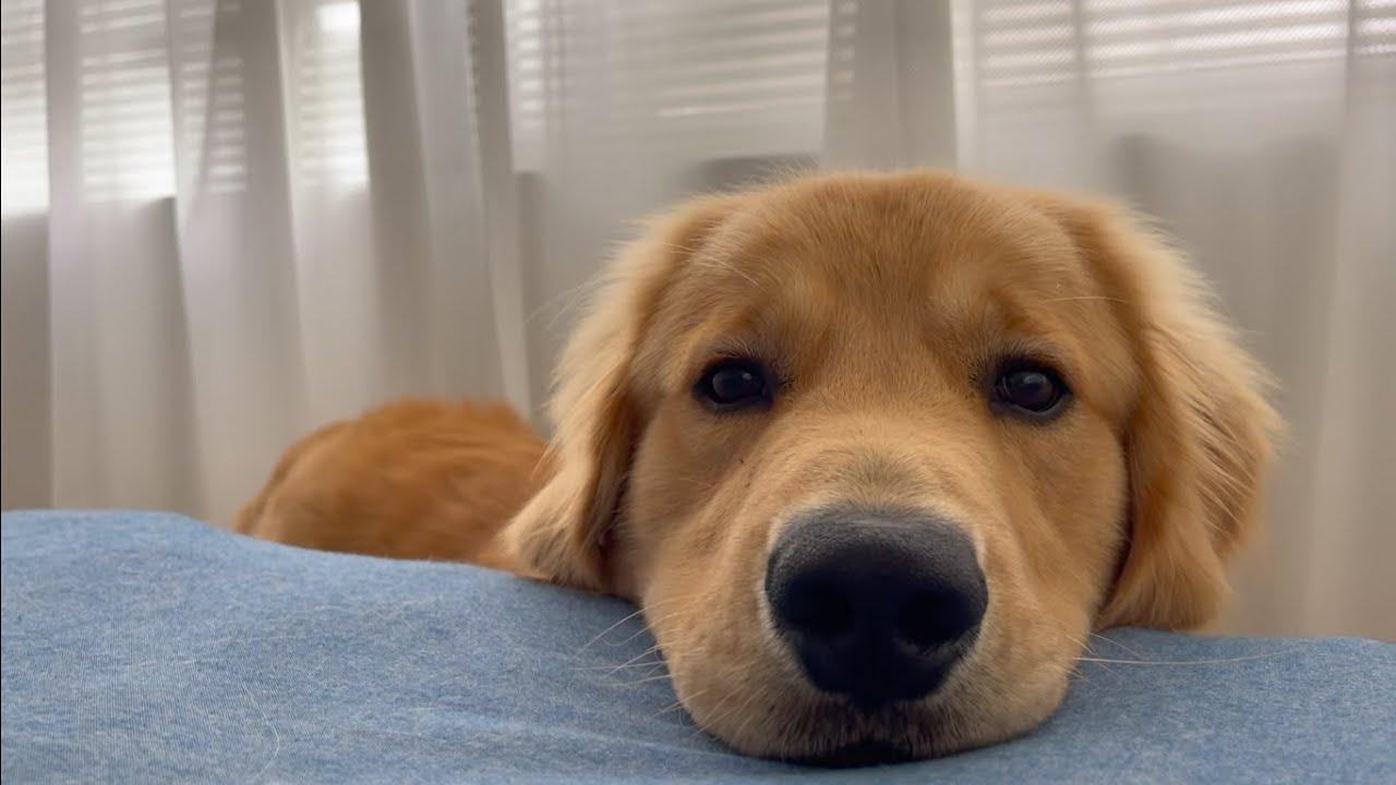 飼い主が起きるまでジーっと待ってる愛犬が天使すぎた