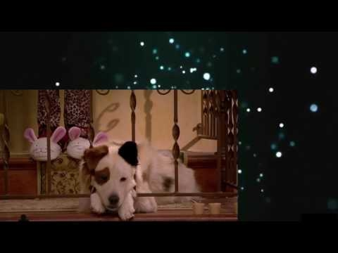 Dog With a Blog S01E07 The Parrot Trap