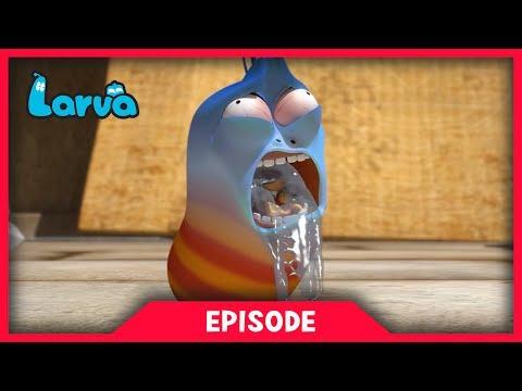 LARVA - THE CHASER   Cartoon Movie   Cartoons For Children   Larva Cartoon   LARVA Official